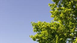 green tree crown Stock Video Footage