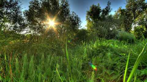 Sunrise Meadow. HDR Timelapse Shot Motorized Slide Footage