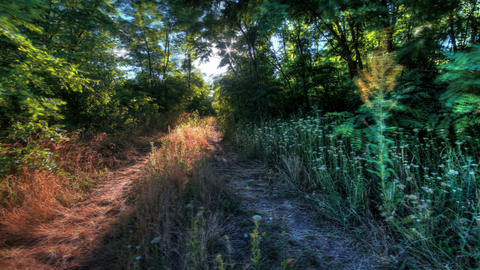 Forest At Dawn. HDR Timelapse Shot Motorized Slide Stock Video Footage