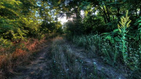 Forest At Dawn. HDR Timelapse Shot Motorized Slide Footage