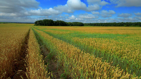 Beautiful Rural Scene Stock Video Footage