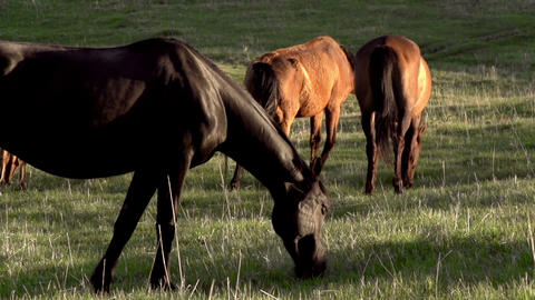 Pasture at Sunset HD Stock Video Footage