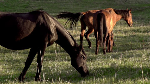Pasture at Sunset HD Footage