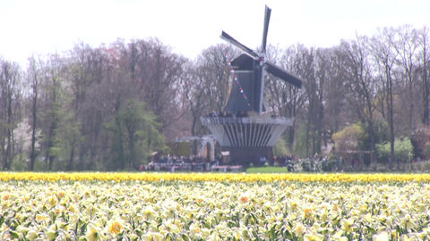 Windmill and flowers Stock Video Footage