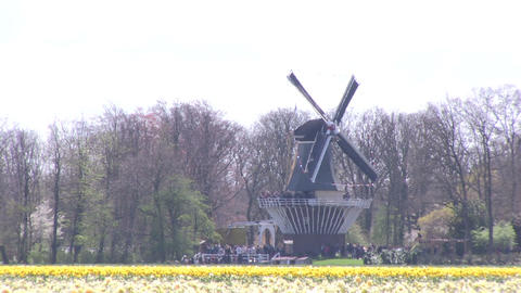 Field of flowers and windmill Footage