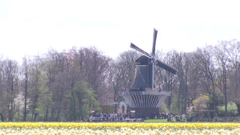 Field of flowers and windmill Stock Video Footage