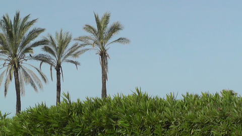 Palms in the blue sky Stock Video Footage