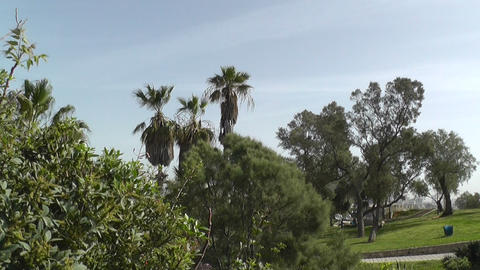 Beautiful park trees over blue sky Stock Video Footage