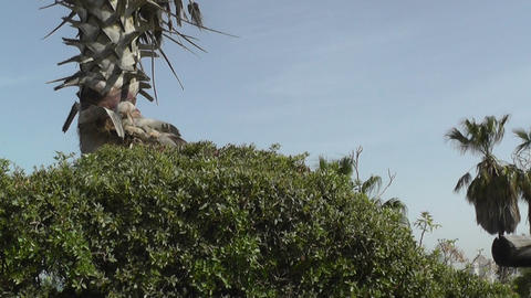 Palm tree,plants and sky Stock Video Footage