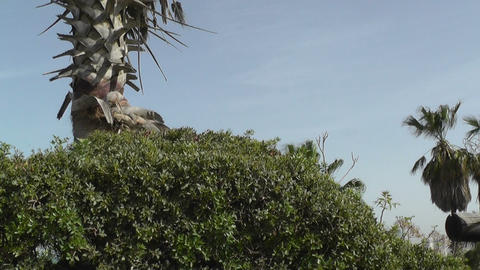 Palm Tree,plants And Sky stock footage