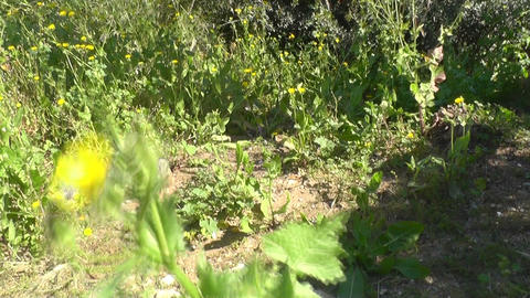 Yellow flowers in green grass Stock Video Footage