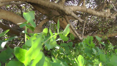 Slow motion green plants Stock Video Footage