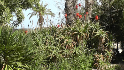 Plants and trees in garden Stock Video Footage