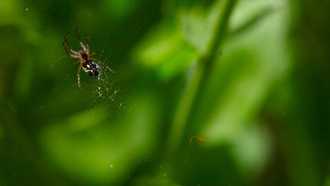 Spider Stock Video Footage