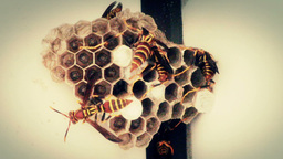 Wasp Nest Stock Video Footage
