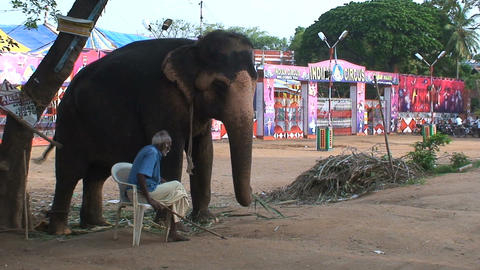 Man sitting next to a circus elephant Stock Video Footage