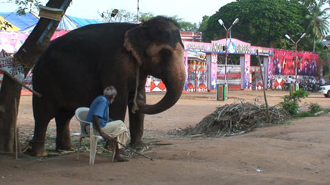 Man sitting next to a circus elephant Footage