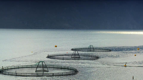 Floating nets of a salmon farm on a nordic fjord Stock Video Footage