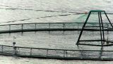 Floating Nets Of A Salmon Farm In A Glacial Fjord stock footage