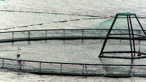Floating nets of a salmon farm in a glacial fjord Stock Video Footage