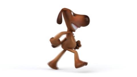 dog run 2 Stock Video Footage