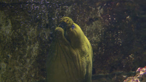 moray 02 Stock Video Footage