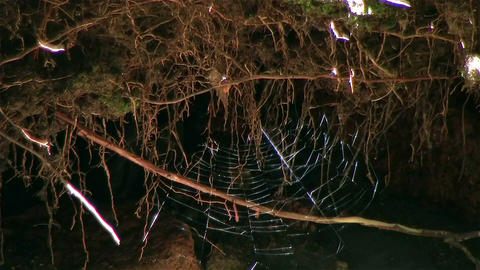 spiderweb 0 A 2 Stock Video Footage