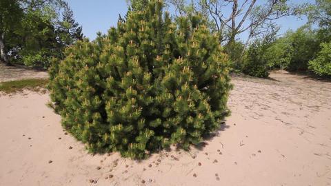 round pine Stock Video Footage