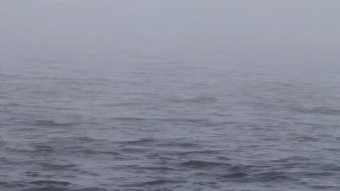 dense fog Stock Video Footage