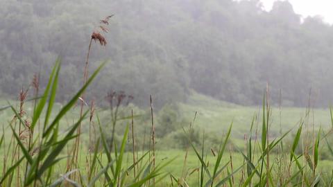 summer warm rain 3 Stock Video Footage