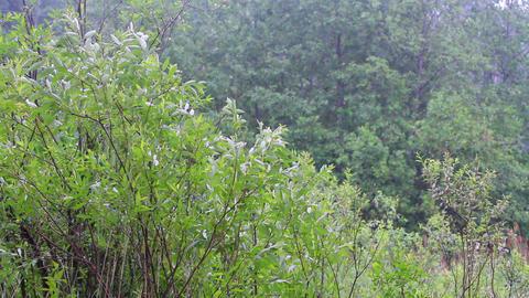 summer warm rain 5 Footage