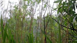 summer warm rain Stock Video Footage