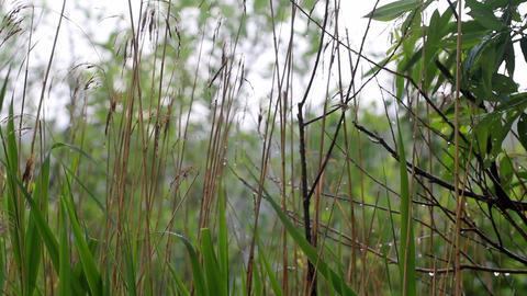 summer warm rain Footage