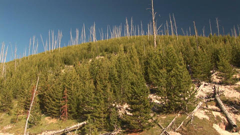 Mud pots in Yellowstone National Park Stock Video Footage