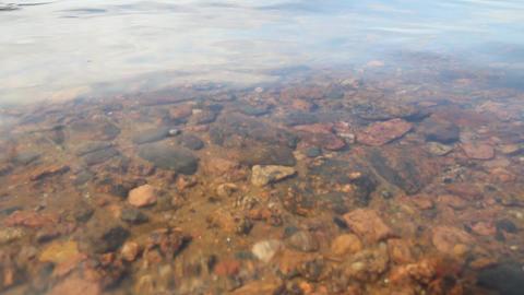 spawning of a bleak (Alburnus alburnus) Footage