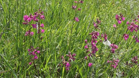 Butterflies on flower field in summer 10 Stock Video Footage