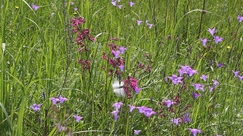 Butterflies on flower field in summer 4 Live Action