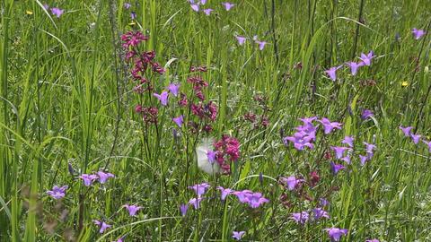 Butterflies on flower field in summer 4 Stock Video Footage