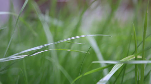 Moves The Focus. Grass stock footage