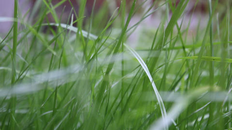 Moves the focus. grass Stock Video Footage