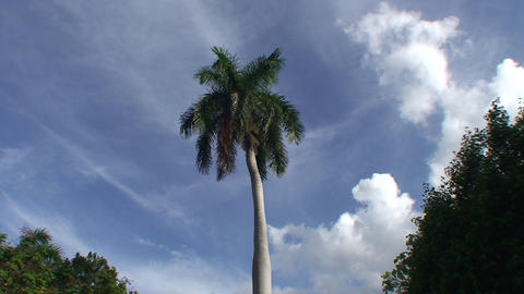 Palmtree in parque Agramonte Footage