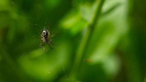 Spider stock footage
