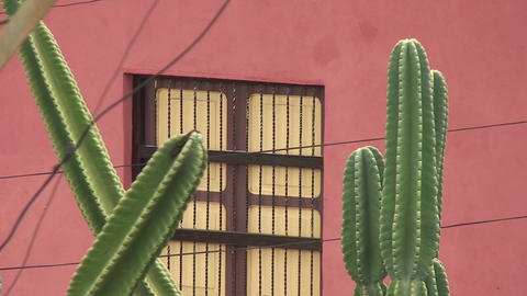 Cactus Stock Video Footage