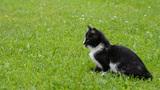Walking Kitten stock footage