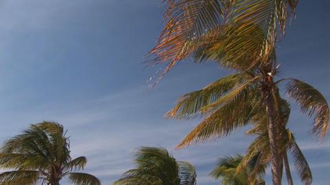 Windy beach Stock Video Footage
