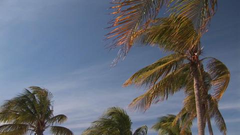 Windy beach Footage