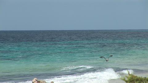 Pelican flies away Footage