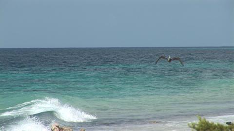 Pelican flies away Stock Video Footage