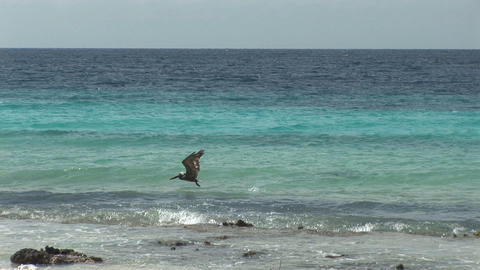 Pelican and kite surfers Stock Video Footage