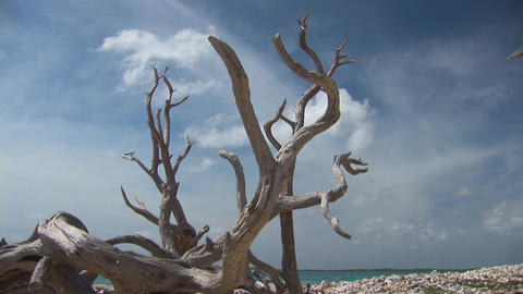 Driftwood and ocean Footage